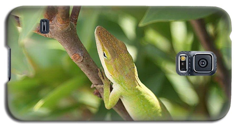 Lizard Galaxy S5 Case featuring the photograph Blusing Lizard by Shelley Jones