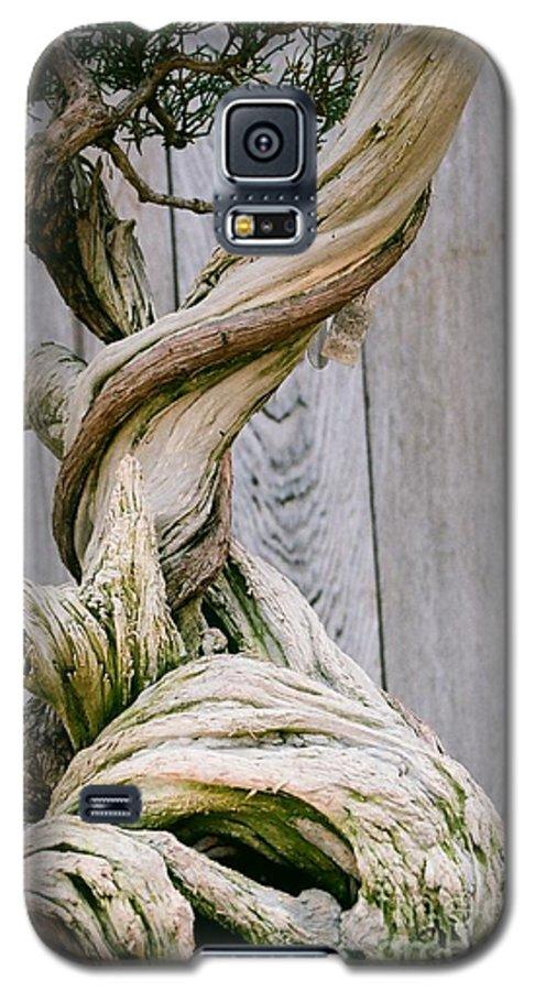 Tree Galaxy S5 Case featuring the photograph Bonsai by Dean Triolo