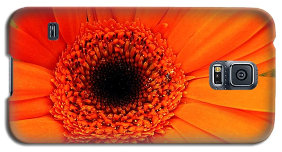 Flower Galaxy S5 Case featuring the photograph Bright Red by Rhonda Barrett