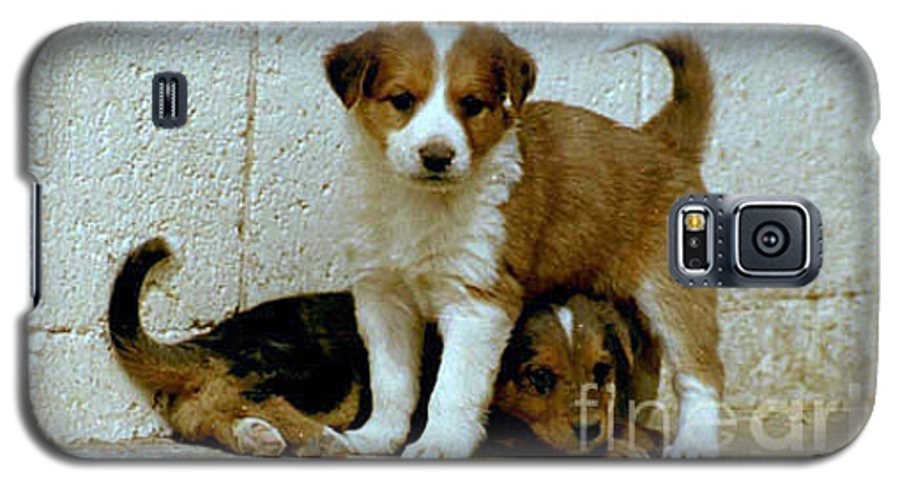 Puppies Galaxy S5 Case featuring the photograph Brothers by Kathy McClure