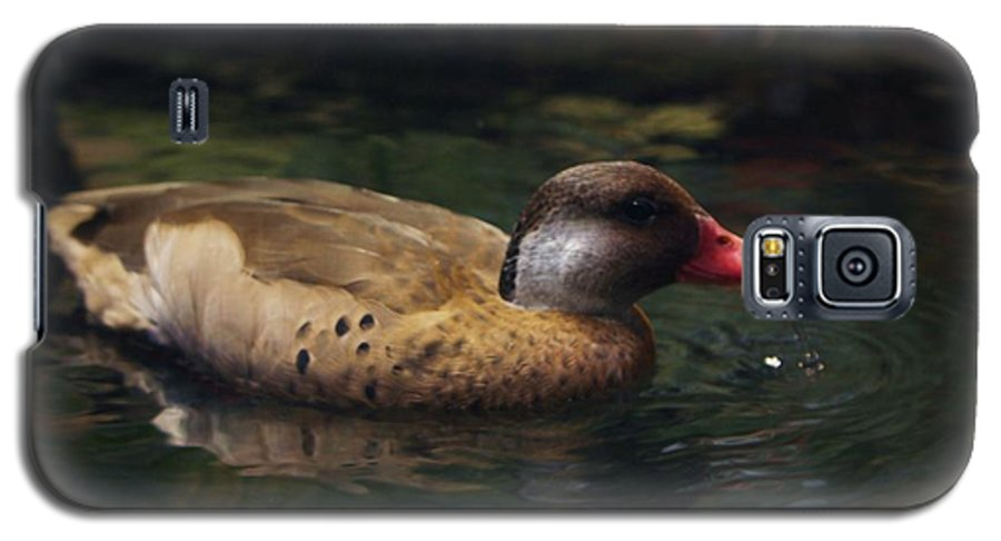 Duck Galaxy S5 Case featuring the photograph Brown Duck by Kenna Westerman
