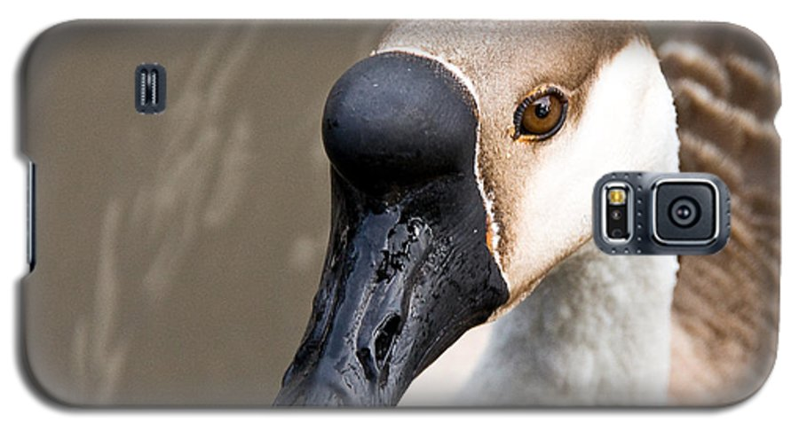Chinese Brown Goose Galaxy S5 Case featuring the photograph Brown Eye by Christopher Holmes