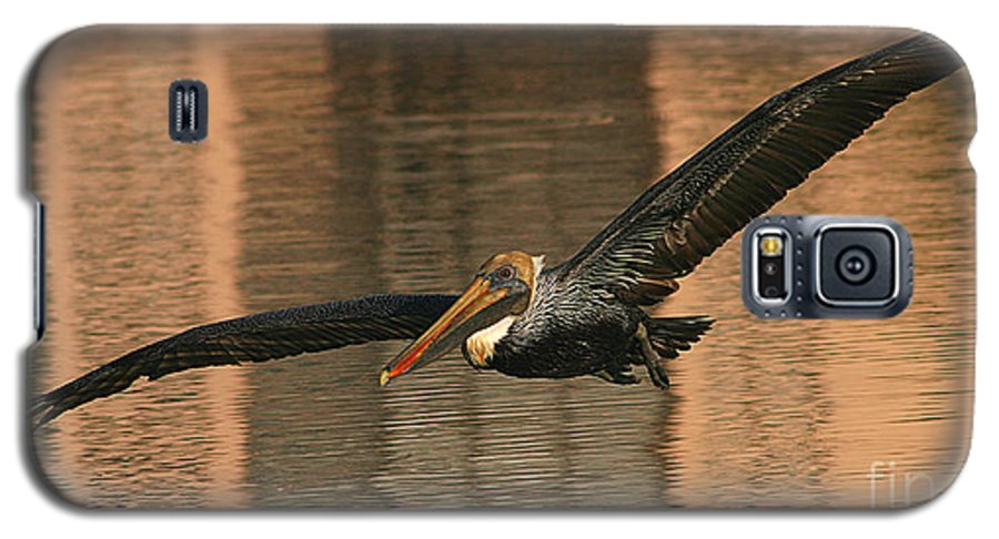 Pelican Galaxy S5 Case featuring the photograph Brown Pelican On A Sunset Flyby by Max Allen