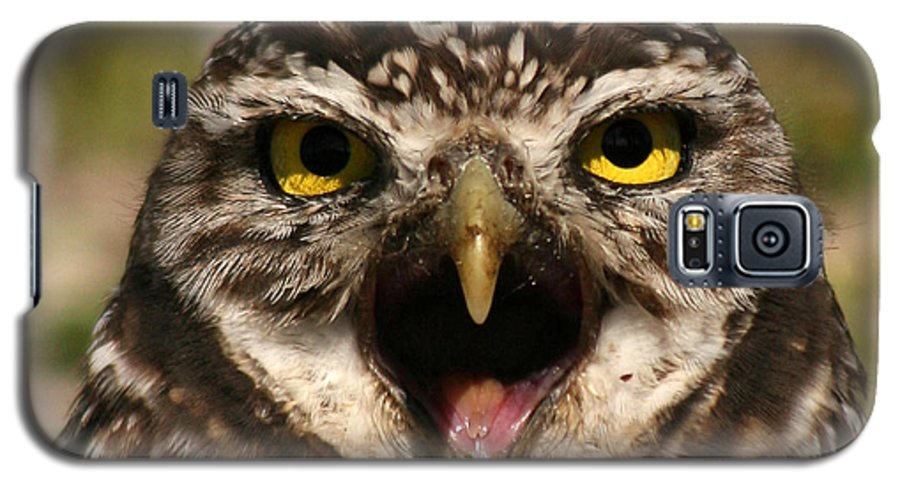 Owl Galaxy S5 Case featuring the photograph Burrowing Owl Eye To Eye by Max Allen