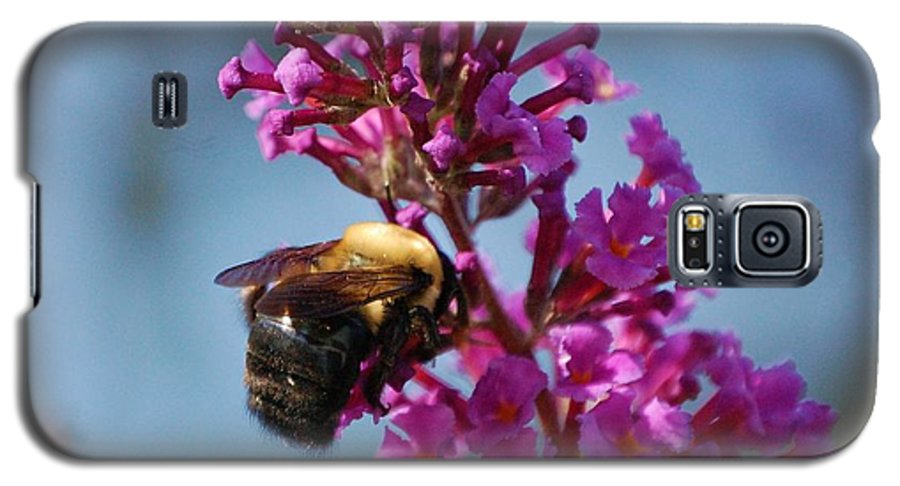Bee Galaxy S5 Case featuring the photograph Buzzed by Debbi Granruth