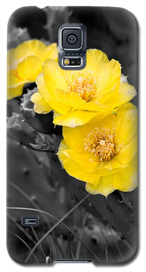 Cactus Galaxy S5 Case featuring the photograph Cactus Blossom by Christopher Holmes