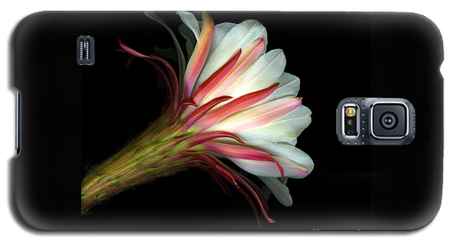 Scanart Galaxy S5 Case featuring the photograph Cactus Flower by Christian Slanec