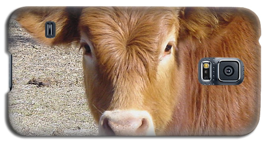 Farm Galaxy S5 Case featuring the painting Calf Smiles by Debbie May
