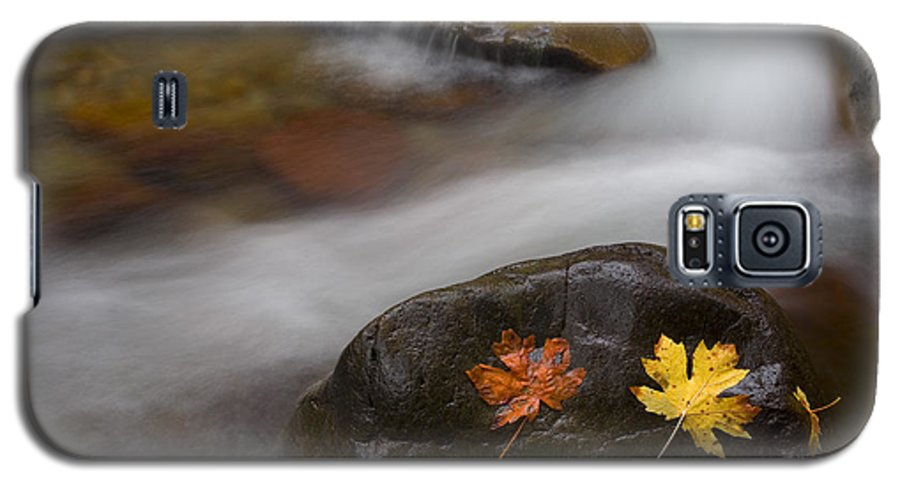 Leaves Galaxy S5 Case featuring the photograph Castaways by Mike Dawson