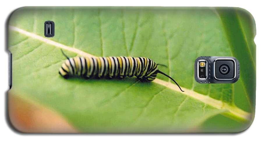 Caterpillar Galaxy S5 Case featuring the photograph Caterpillar by Kathy Schumann