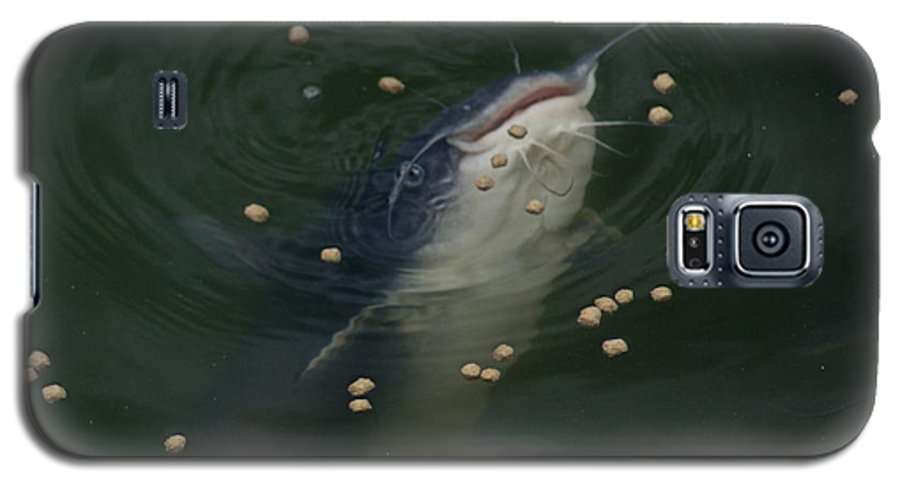 Catfish Galaxy S5 Case featuring the photograph Catmandu by Debbie May