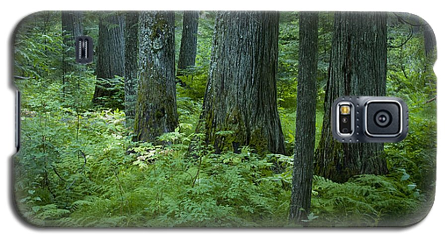 Grove Galaxy S5 Case featuring the photograph Cedar Grove by Idaho Scenic Images Linda Lantzy