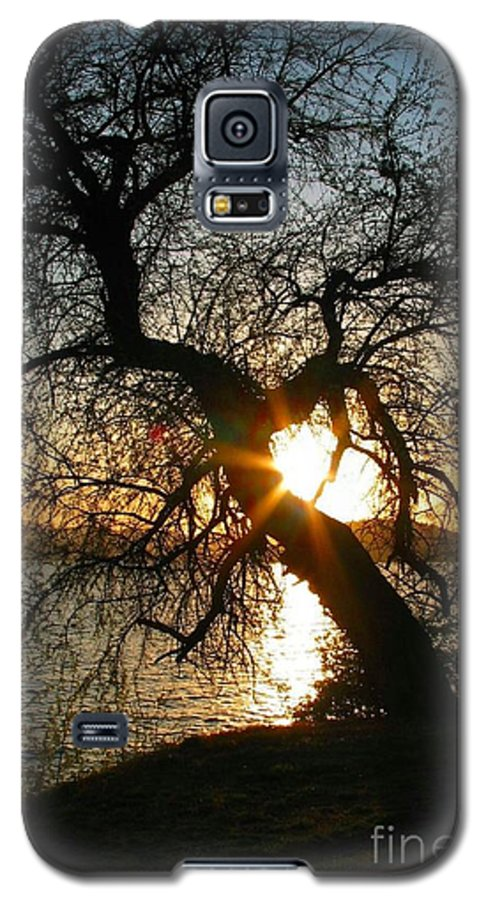 Tree Galaxy S5 Case featuring the photograph Character by Idaho Scenic Images Linda Lantzy