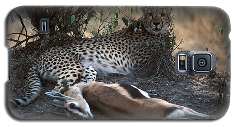 Spots Galaxy S5 Case featuring the photograph Cheetah With Kill by Carl Purcell