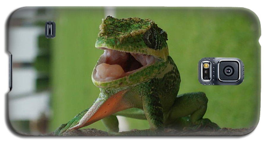 Iguana Galaxy S5 Case featuring the photograph Chilling On Wood by Rob Hans