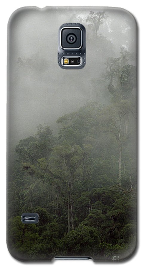 Rainforest Galaxy S5 Case featuring the photograph Cloud Forest by Kathy McClure
