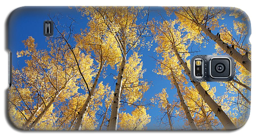 Aspen Galaxy S5 Case featuring the photograph Colorado Aspen by Jerry McElroy