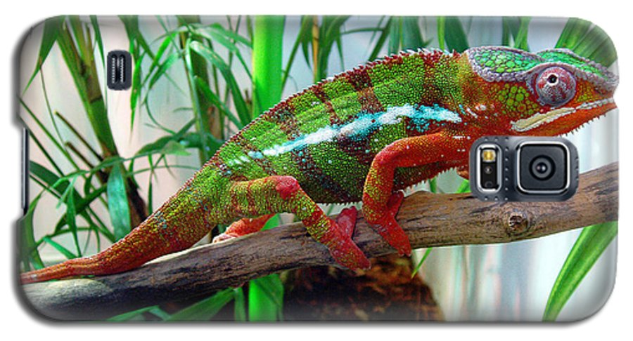 Chameleon Galaxy S5 Case featuring the photograph Colorful Chameleon by Nancy Mueller