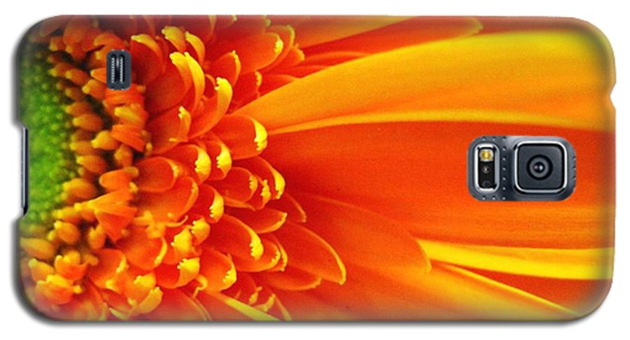Red Galaxy S5 Case featuring the photograph Colors Galore by Rhonda Barrett