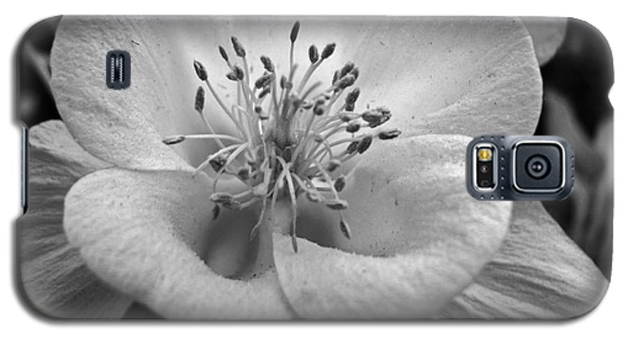 Flowers Galaxy S5 Case featuring the photograph Columbine by Amanda Barcon