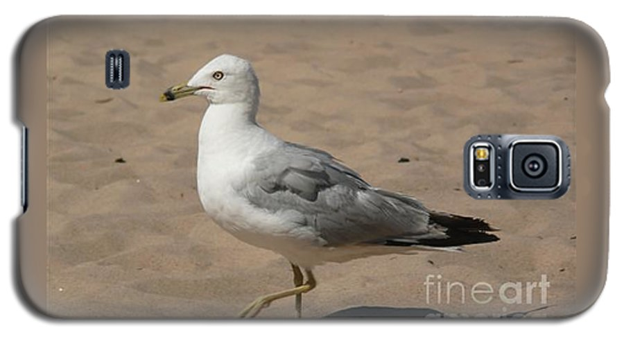 Bird Galaxy S5 Case featuring the photograph Come On Take The Picture Already by Barb Montanye Meseroll