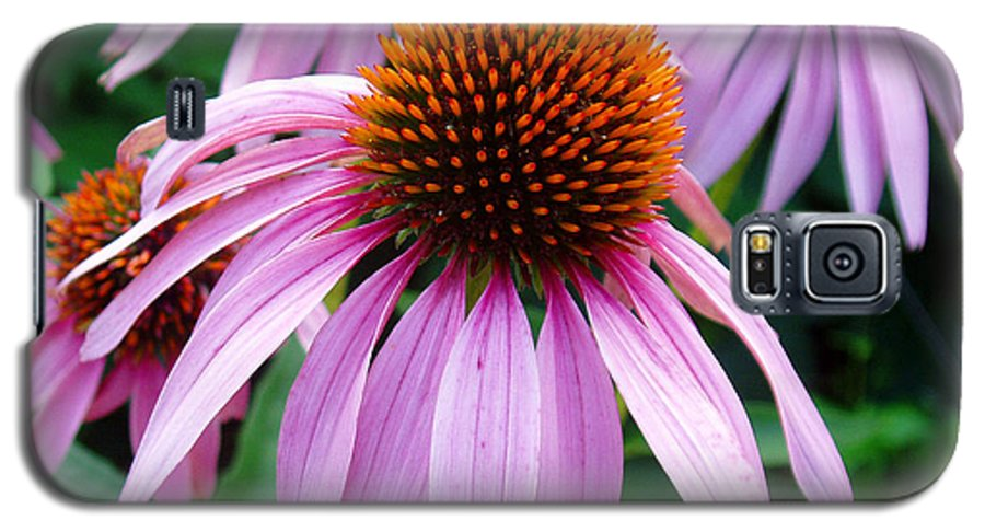 Coneflowers Galaxy S5 Case featuring the photograph Three Coneflowers by Nancy Mueller