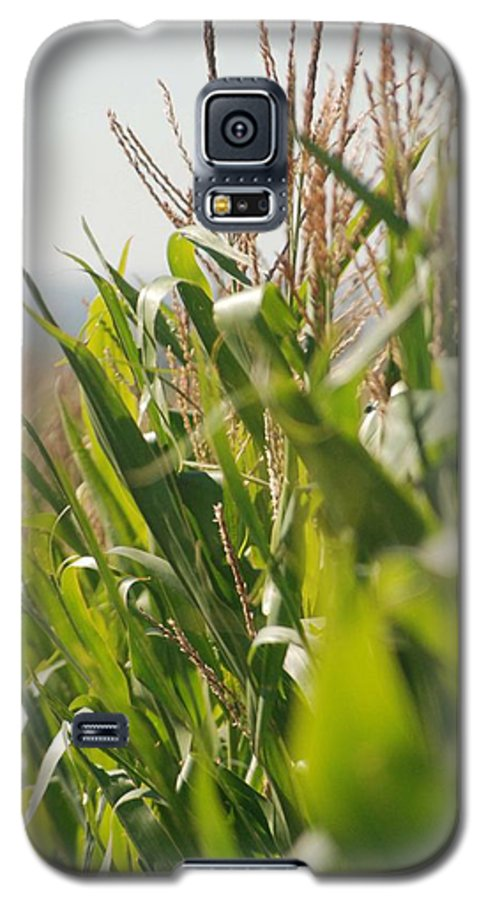 Corn Galaxy S5 Case featuring the photograph Corn Country by Margaret Fortunato