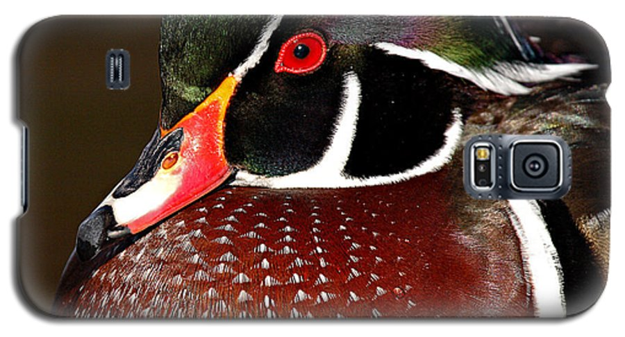 Duck Galaxy S5 Case featuring the photograph Courtship Colors Of A Wood Duck Drake by Max Allen