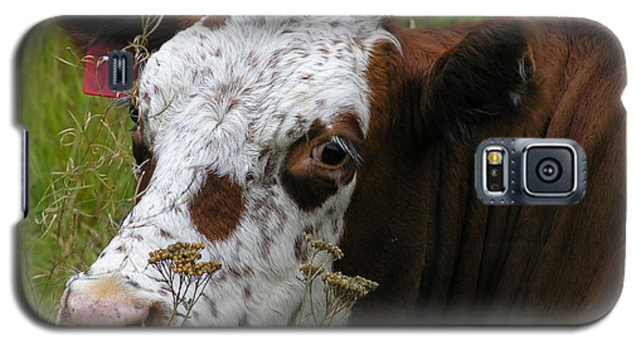 Tongue Galaxy S5 Case featuring the photograph Cow Tongue by Louise Magno