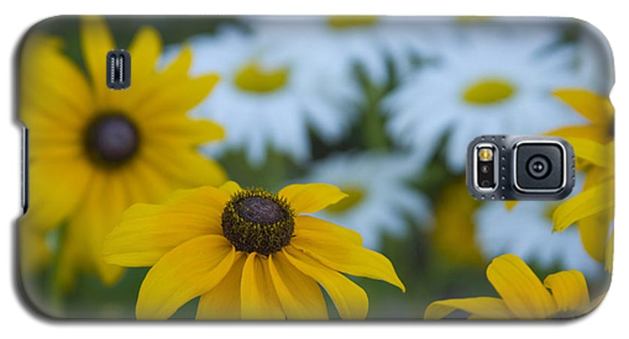 Daisy Galaxy S5 Case featuring the photograph Daisies by Idaho Scenic Images Linda Lantzy
