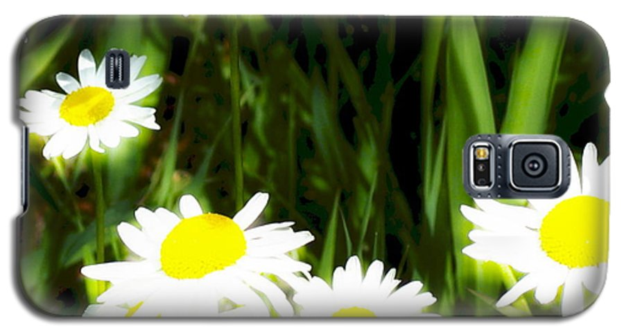 Daisies Galaxy S5 Case featuring the photograph Daisy Dream by Idaho Scenic Images Linda Lantzy