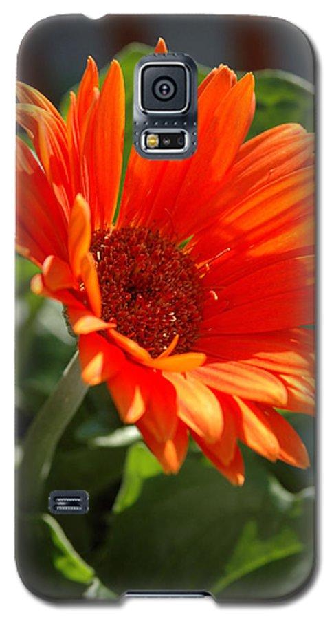 Daisy Galaxy S5 Case featuring the photograph Daisy by Kathy Schumann