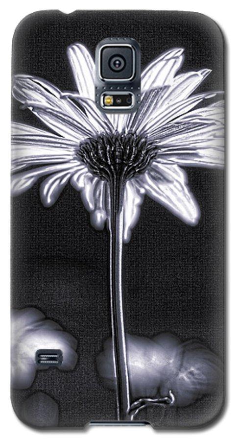 Black & White Galaxy S5 Case featuring the photograph Daisy by Tony Cordoza