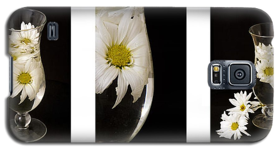 Flowers Galaxy S5 Case featuring the photograph Daisy Triptych by Ayesha Lakes