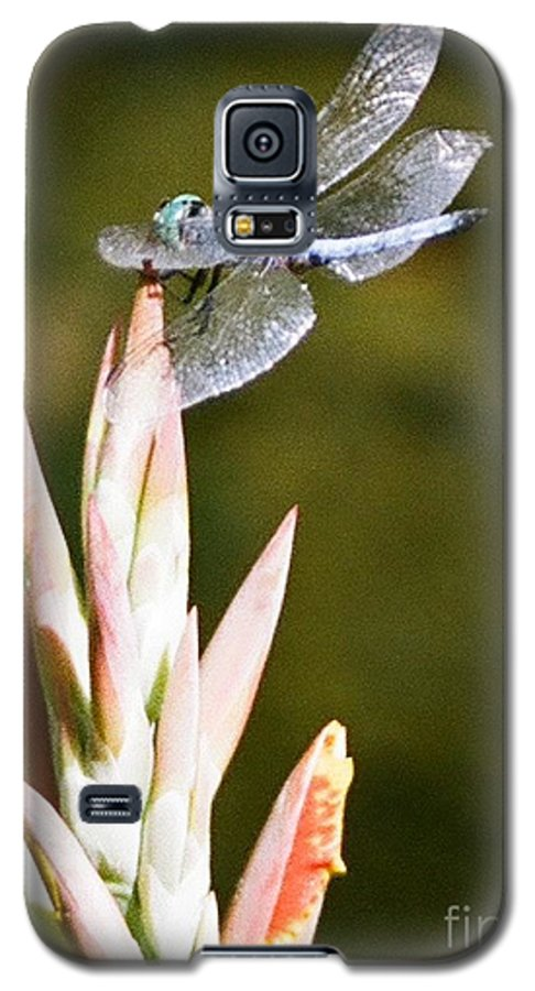 Dragonfly Galaxy S5 Case featuring the photograph Damselfly by Dean Triolo
