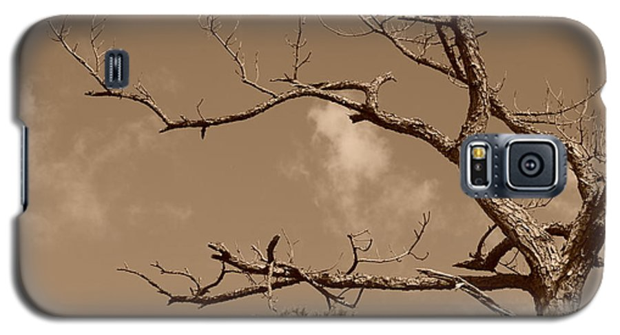 Sepia Galaxy S5 Case featuring the photograph Dead Wood by Rob Hans