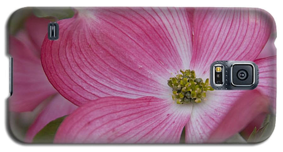 Dogwood Galaxy S5 Case featuring the photograph Dogwood Bloom by Idaho Scenic Images Linda Lantzy