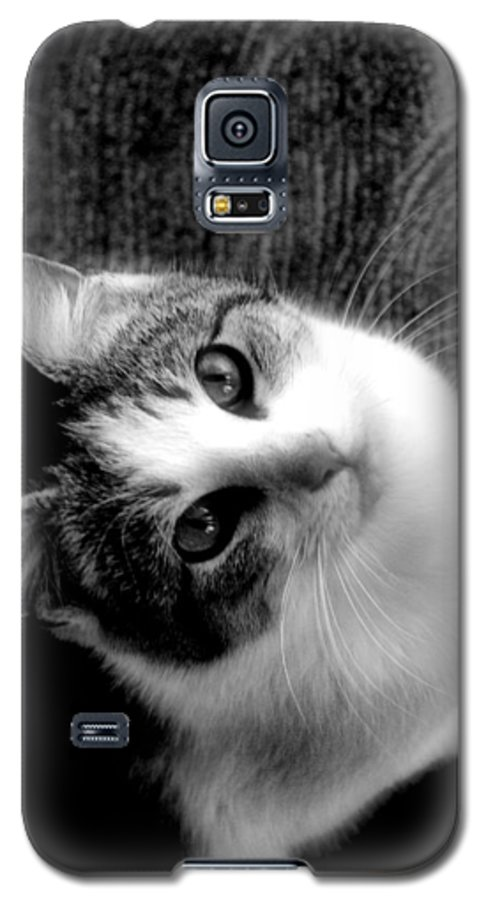 Cat Galaxy S5 Case featuring the photograph Don't Ever Leave by Gaby Swanson
