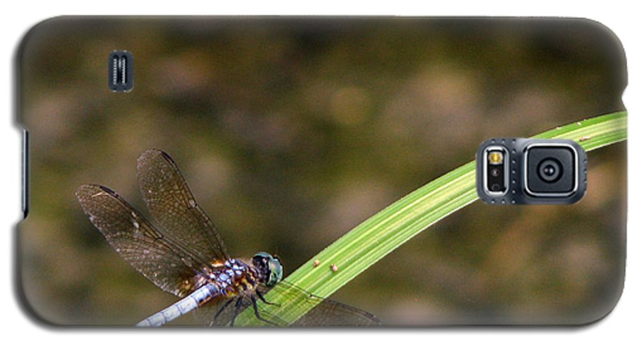 Dragonfly Galaxy S5 Case featuring the photograph Dragonfly by Amanda Barcon