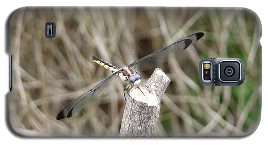 Wildlife Galaxy S5 Case featuring the photograph Dragonfly I by Kathy Schumann