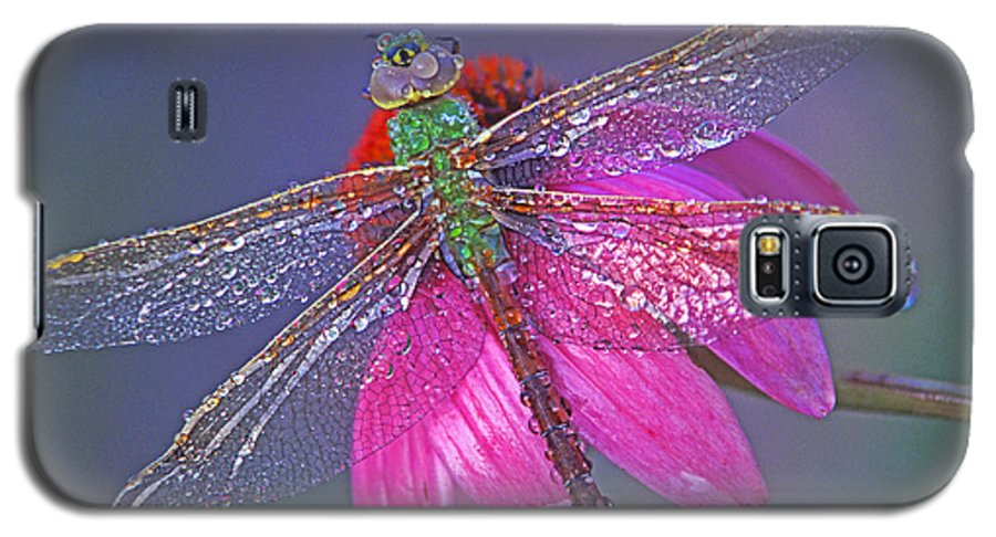 Dew Covered Dragonfly Rests On Purple Cone Flower Galaxy S5 Case featuring the photograph Dreaming Dragon by Bill Morgenstern