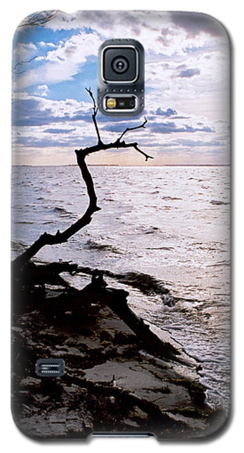 Barnegat Galaxy S5 Case featuring the photograph Driftwood Dragon-barnegat Bay by Steve Karol