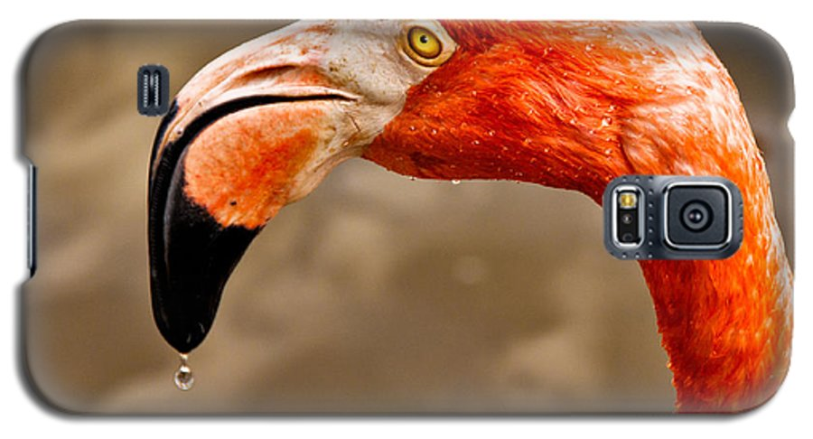 Flamingo Galaxy S5 Case featuring the photograph Dripping Flamingo by Christopher Holmes