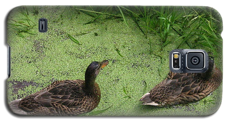 Duck Galaxy S5 Case featuring the photograph Ducks In Pond by Melissa Parks