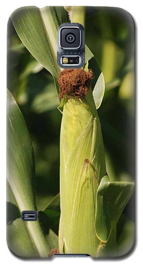 Farm Galaxy S5 Case featuring the photograph Ear Of Corn by Margaret Fortunato