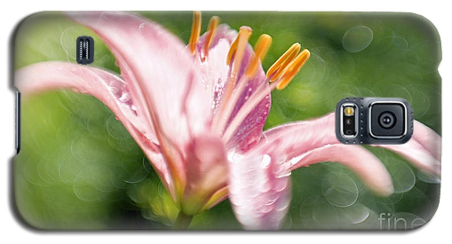 Easter Lily Lilium Lily Flowers Flower Floral Bloom Blossom Blooming Garden Nature Plant Petals Plants Grow Species Garden One Single 1 Petals Close-up Close Up Cultivate Botanical Botany Nature Galaxy S5 Case featuring the photograph Easter Lily 1 by Tony Cordoza