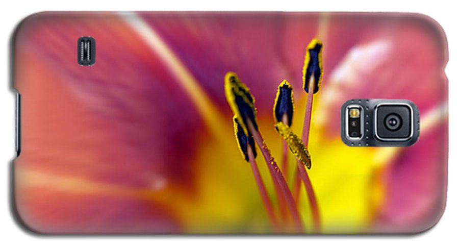 Easter Lily Lilium Lily Flowers Flower Floral Bloom Blossom Blooming Garden Nature Plant Petals Plants Grow Species Garden One Single 1 Petals Close-up Close Up Cultivate Botanical Botany Nature Galaxy S5 Case featuring the photograph Easter Lily 3 by Tony Cordoza