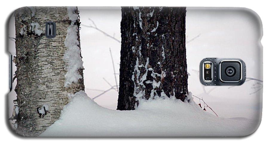 Tree Galaxy S5 Case featuring the photograph Ebony And Ivory by Faith Harron Boudreau