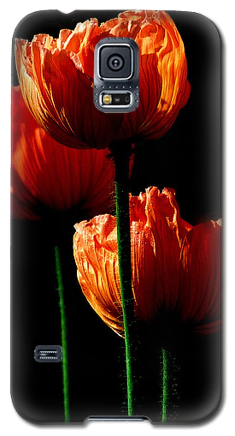 Photograph Galaxy S5 Case featuring the photograph Elegance by Stephie Butler
