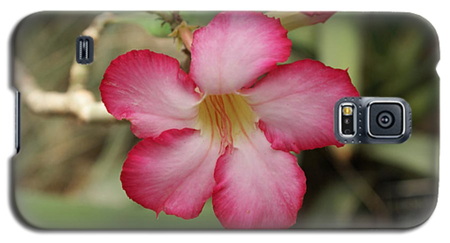 Floral Galaxy S5 Case featuring the photograph Elegant by Shelley Jones